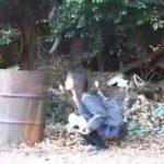 野外放尿した直後の女子校生が廃屋に連れ込まれ犯される